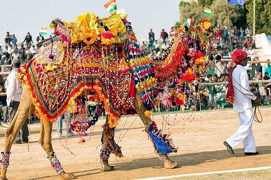 Royal Rajasthan avec la foire de...