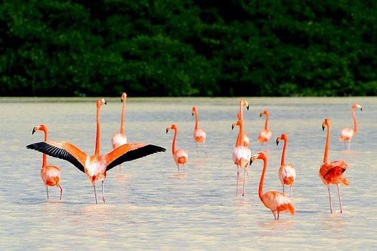 5 Tage Flamingos, Henequen und...