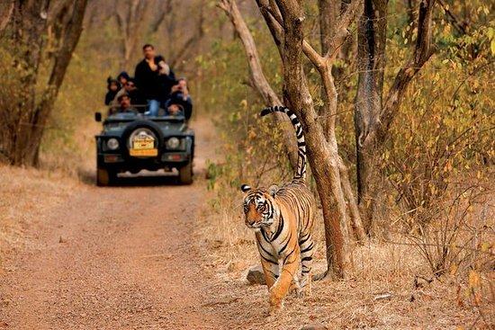 印度之旅11天开车
