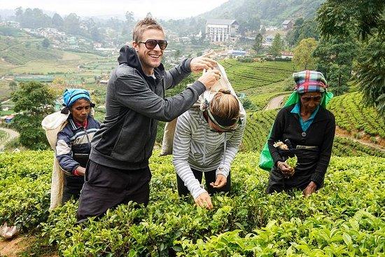 4 Day Tour to Kandy Nuwara Eliya Ella...