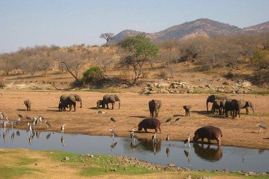 6 dagar Utforska Tanzanias södra ...