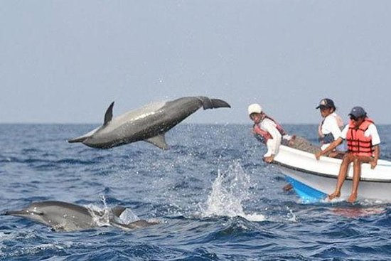 Small Group Dolphin Watching...