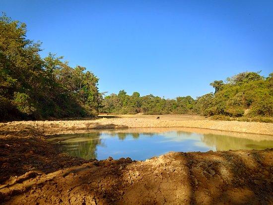 Cardamom Grove Homestay: Lake view