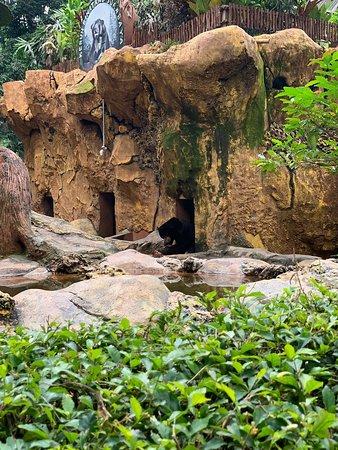 Kebun Binatang Surabaya Kbs Indonesia Review