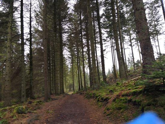 Nercwys Forest