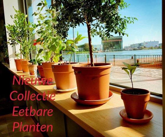 Ridderkerk, The Netherlands: Eetbare kamerplanten