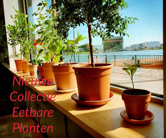 Paviljoen Struis: Eetbare kamerplanten