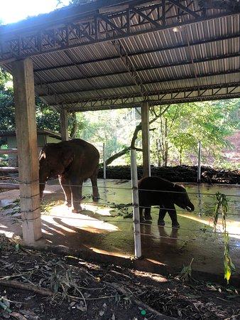 chai lai orchid bad treatment of elephants