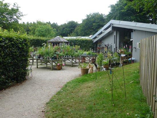 Drewsteignton, UK: Garden shop