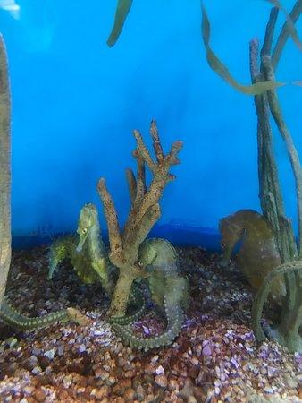 Mote Marine Laboratory and Aquarium (Sarasota) - 2019 All ...