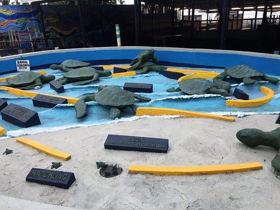 Life cycle of sea turtles