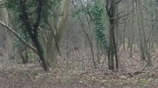 Bedford, UK: Lovely peaceful walk ( deer pictured)