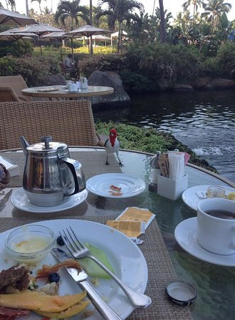 Breakfast companions, Makena Golf and Beach Resort (Maui, February 2015)