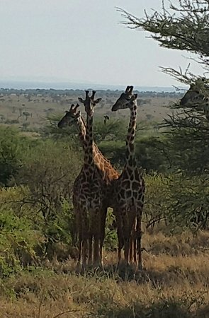Tanzânia: Tanzanya