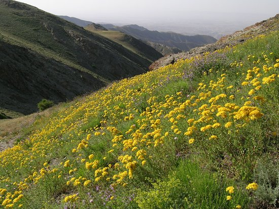 Jizzakh, Uzbekistan: flowers in Nuratau Mountains