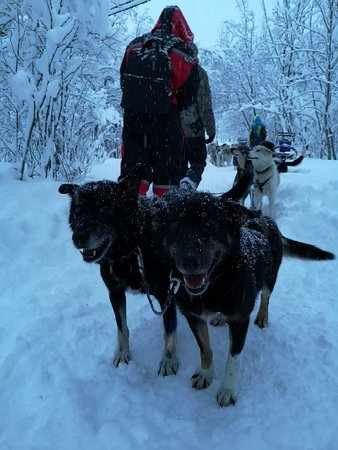Nordkjosbotn, Νορβηγία: Northern Light Dog Adventure