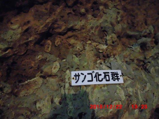 さんご化石も見られます