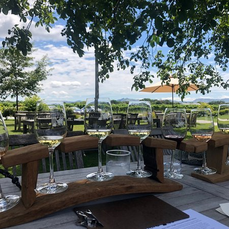 Gisborne, New Zealand: Wine Flights under a shady walnut tree