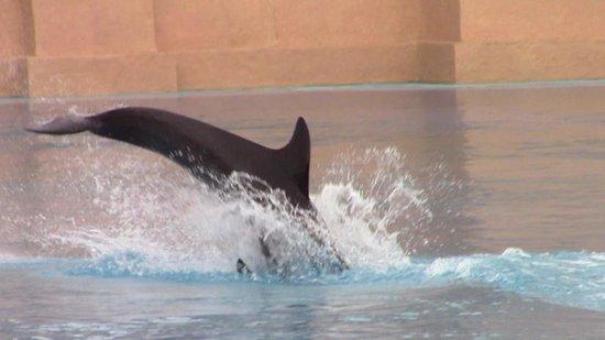 Dolphin Bay: esperienza indimenticabile