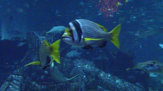 Aquaventure Waterpark: divertimento e tante attrazioni