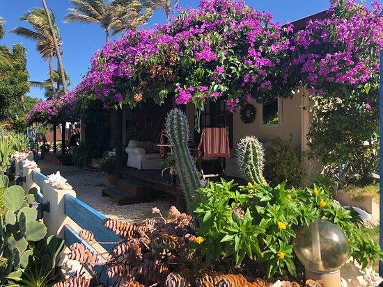 Aruba Sunset Beach Studios Photo