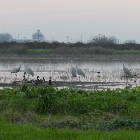 A Festival Of Cranes Bay Nature >> Isenberg Crane Reserve Lodi 2019 All You Need To Know Before You