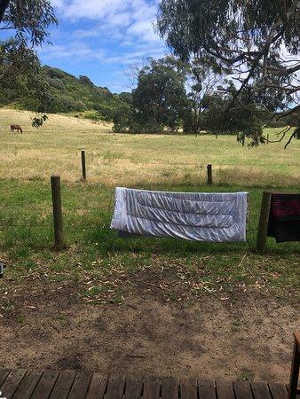 Bimbi park. Cape Otway