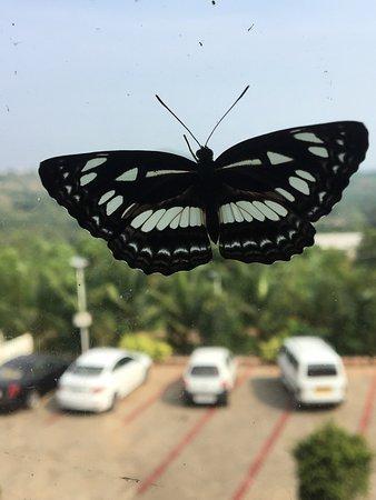 Moodabidri, الهند: Flora and Fauna at the property