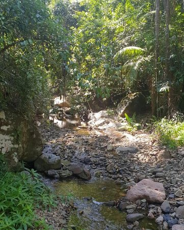 Upper Crystal Creek, Australia: Rainforest walk
