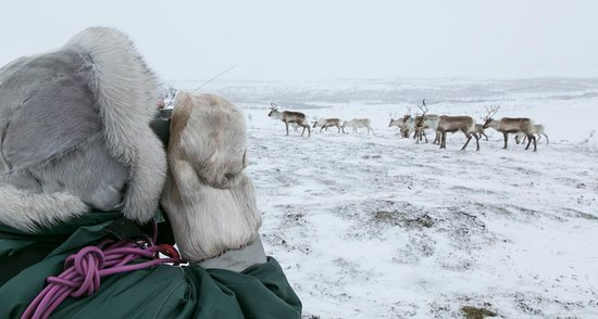 Nuorgam, Suomi: Just another day by the reindeer herd.