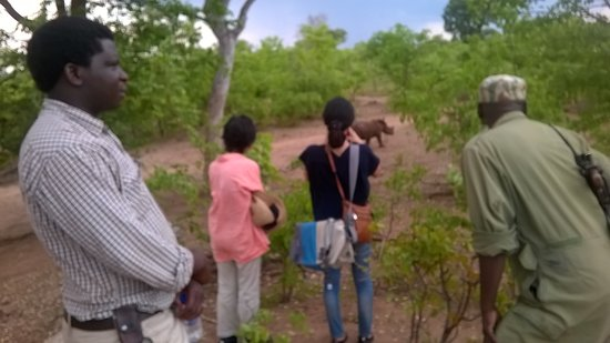 Zâmbia: RHINO WALK IN MOSI-TUNYA NATIONAL PARK .WHATSAP MOO SAFARIS ON +260973856740