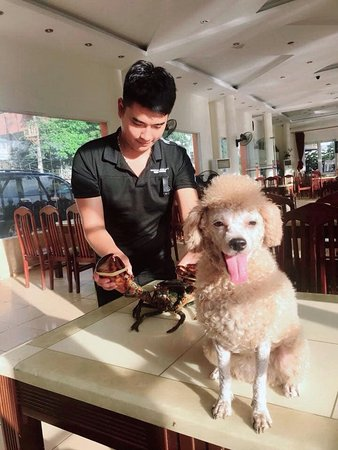 Tôi và chú chó của tôi tại nhà hàng