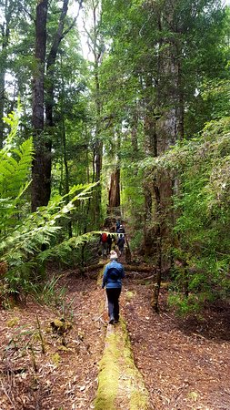 Tarkine Trails: Walking to the river