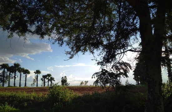 Magway, Myanmar: Scenery of Tamarind and Palm trees from center of Myanmar