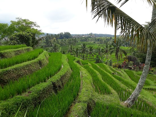 Bali Alentours