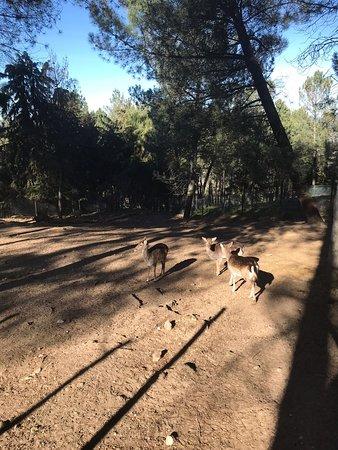 Parque Ecologico de Gouveia