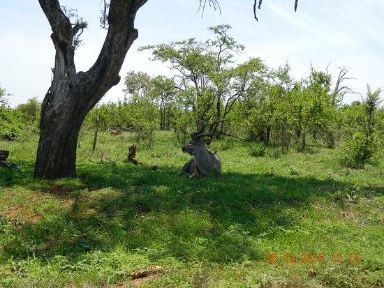 Moyo Wa Tandala Safari