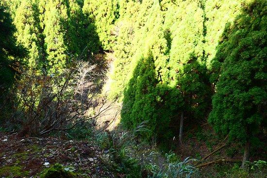 Genbao Castle Ruins