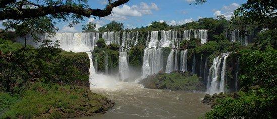 Tangol Puerto Iguazu