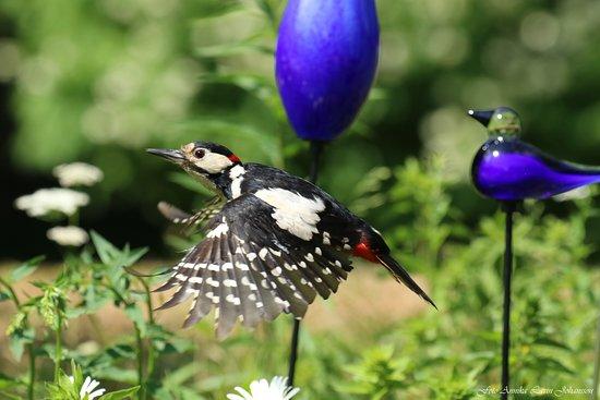 Art In Garden: även fåglar gillar glasen