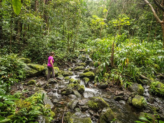 Oahu, Havai: Exploring the jungle in Hawaii