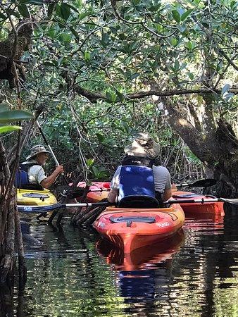 Paddling through the mangroves.