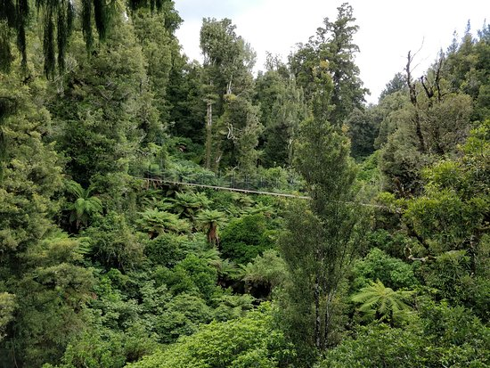 Rotorua Canopy Tours: Longest Zipline of the day