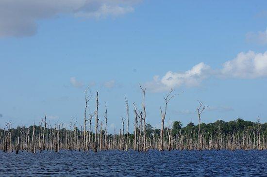 Kourou, Γαλλική Γουιάνα: Lac des bois morts (barrage de Petit Saut)