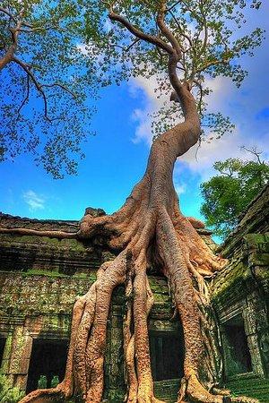 Remorque Cambodia Tour 사진