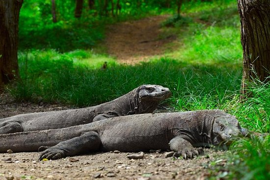 3-Day Komodo National Park Tour...