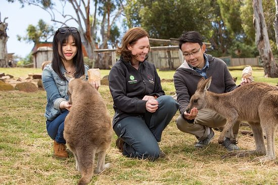 Bonorong Wildlife Park und Richmond ...