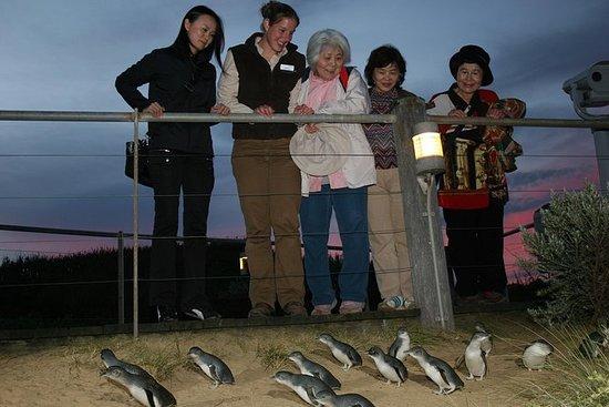 Phillip Island Penguin Parade Tour...