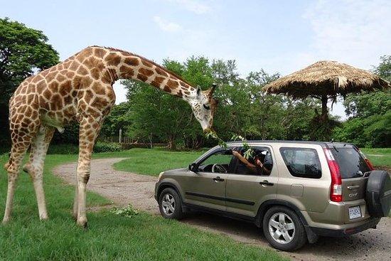 2-dagers tur: Auto Safari Chapín Zoo...