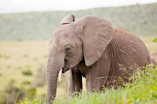 2-Day Western Cape Big 5 Safari and...